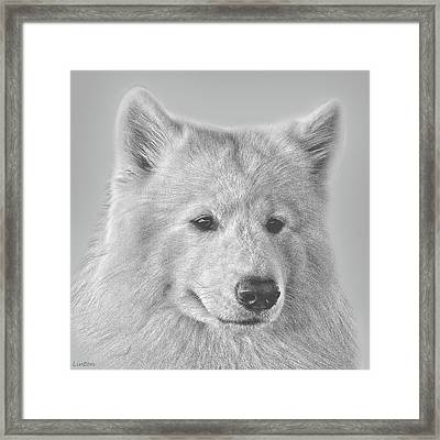 Samoyed Framed Print by Larry Linton