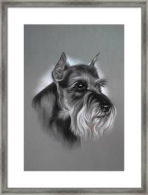 Schnauzer Framed Print by Patricia Ivy