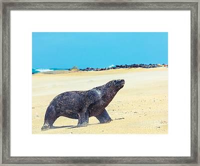 Sea Lion Framed Print by MotHaiBaPhoto Prints