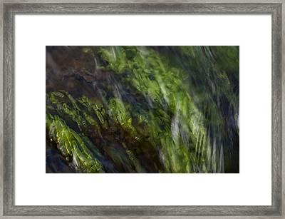 Sea Weed Framed Print by Michael Mogensen