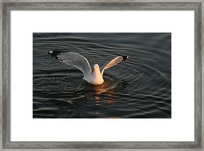 Seagulls At Sunset Framed Print by Valia Bradshaw