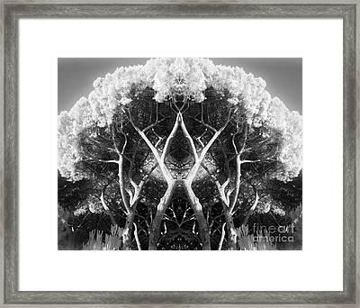Shelter Framed Print by Olga Zamora