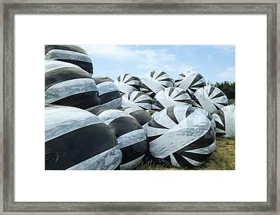 Silage Bales Framed Print by David Aubrey