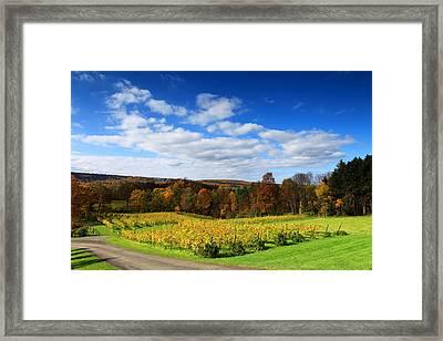 Six Miles Creek Vineyard Framed Print by Paul Ge