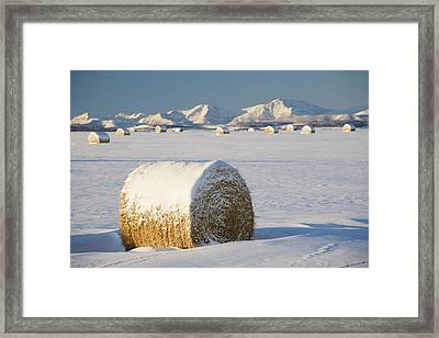 Snow-covered Hay Bales Okotoks Framed Print by Michael Interisano