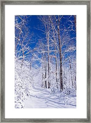 Snowy Path Framed Print by Rob Travis