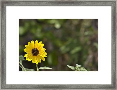 Solitary Framed Print by Teresa Dixon
