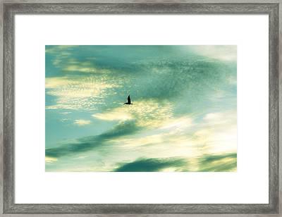 Solo Flight Framed Print by Marilyn Hunt