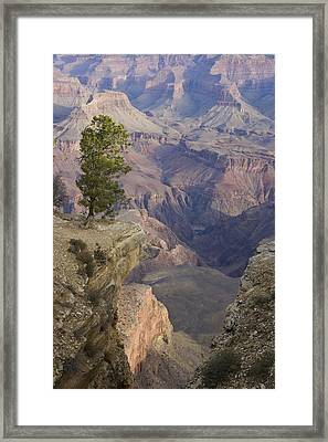 South Rim, Grand Canyon, Arizona, Usa Framed Print by Peter Adams