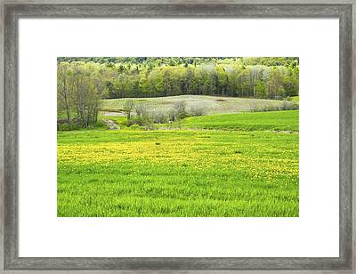 Spring Farm Landscape With Dandelion Bloom In Maine Framed Print by Keith Webber Jr