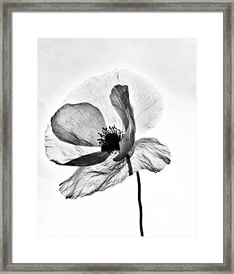 Standing Alone Framed Print by Marianna Mills