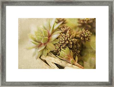 Succulents Framed Print by Bonnie Bruno