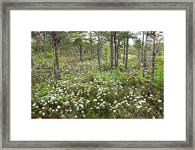 swamp Dzelmes Framed Print by Igors Parhomciks