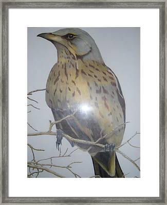 Swedish Bird Framed Print by Per-erik Sjogren