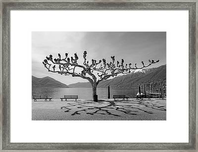 sycamore trees in Ascona - Ticino Framed Print by Joana Kruse