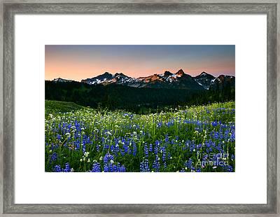 Tatoosh Dawn Framed Print by Mike  Dawson