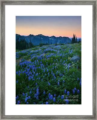 Tatoosh Sunrise Framed Print by Mike  Dawson