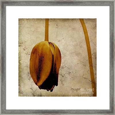 Textured Tulip Framed Print by Bernard Jaubert