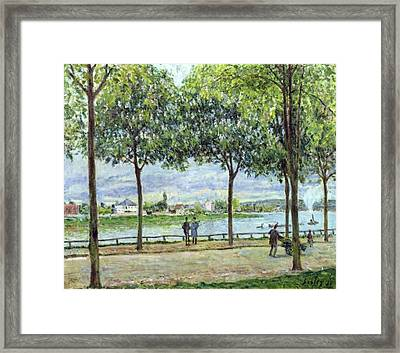 The Avenue Of Chestnut Trees Framed Print by Alfred Sisley
