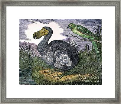 The Mauritius Dodo Framed Print by Granger
