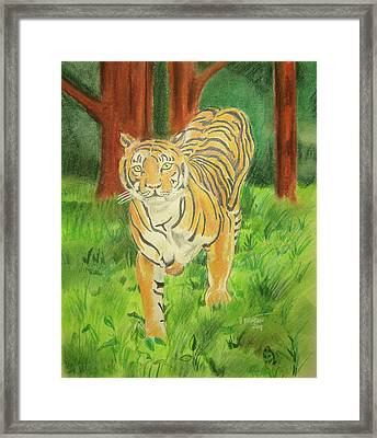 Tiger On The Prowl Framed Print by John Keaton