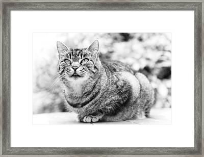 Tomcat Framed Print by Frank Tschakert