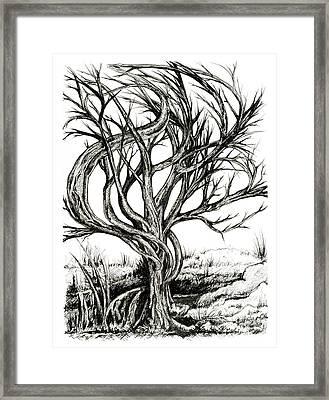 Twisted Tree Framed Print by Danielle Scott