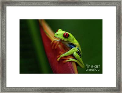Tree Frog 19 Framed Print by Bob Christopher