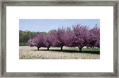 Trees On Warwick Framed Print by Trish Tritz