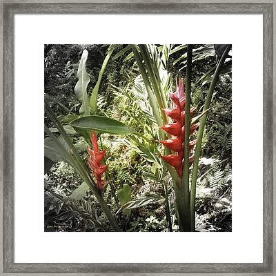 Tropical Flowers Framed Print by Gina De Gorna