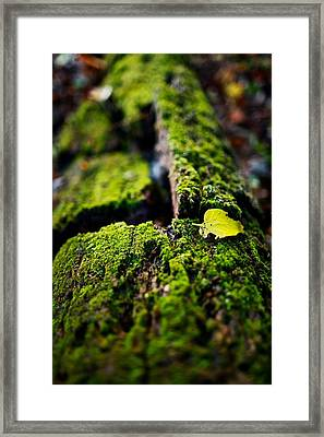 Untitled  Framed Print by Jacob Messer