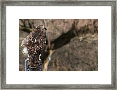 Watchful Eyes Framed Print by Theo Tan