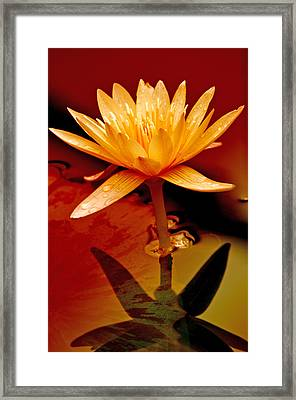 Water Lily 1 Framed Print by Julie Palencia