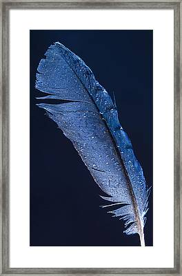 Wet Jay Framed Print by Jean Noren