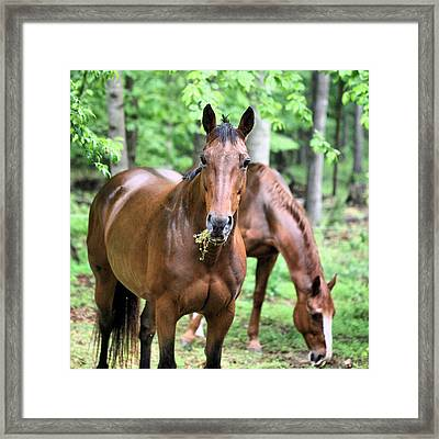 What Framed Print by JC Findley