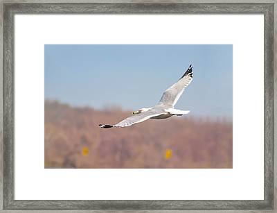 Wingspan Framed Print by Bill Cannon