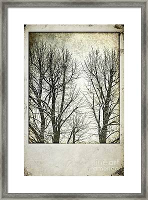 Winter Trees Framed Print by Silvia Ganora