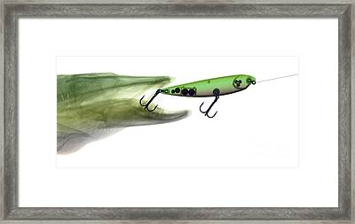 X-ray Of Muskie & Lure Framed Print by Ted Kinsman