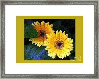 Yellow Dahlias Framed Print by Dale   Ford
