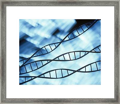 Dna Helices Framed Print by Lawrence Lawry