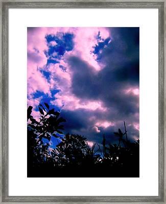 Looking Up  Framed Print by Allen n Lehman