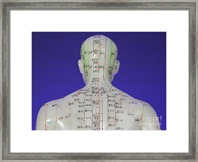 Acupuncture Model Framed Print by Photo Researchers, Inc.