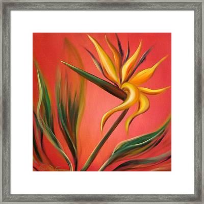Bird Of Paradise Framed Print by Gina De Gorna