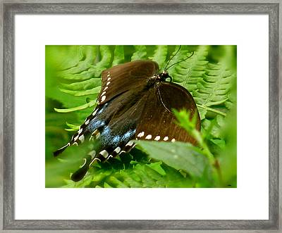Butterfly Collection Framed Print by Debra     Vatalaro