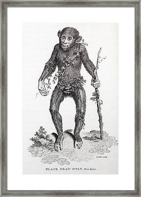 1809 Reprint Of Tyson 1698 Chimpanzee Framed Print by Paul D Stewart