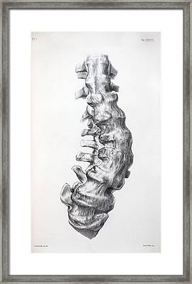 1852 Gideon Mantell's Fused Spine Framed Print by Paul D Stewart