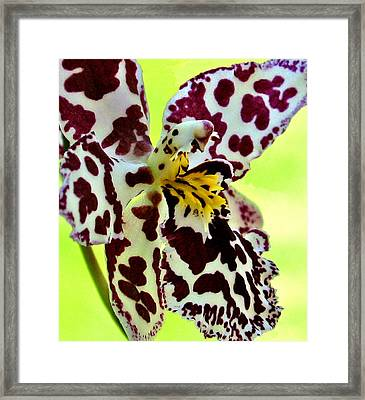 Orchid Flower Bloom Framed Print by C Ribet