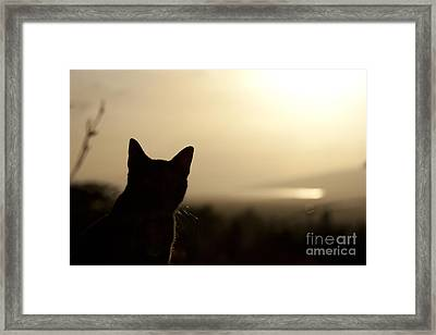 A Pure Soul Framed Print by Sharon Mau