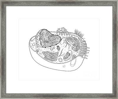 Animal Cell Diagram Framed Print by Science Source