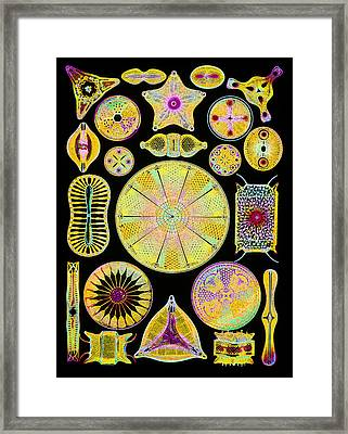 Art Of Diatom Algae (from Ernst Haeckel) Framed Print by Mehau Kulyk